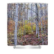 Trees In Autumn Shower Curtain