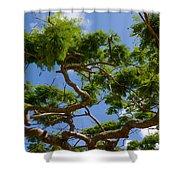 Trees In Bermuda Shower Curtain
