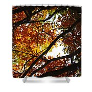 Trees In Fall Fashion Shower Curtain