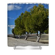 Trees In January Shower Curtain by Jo Ann
