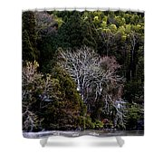 Trees In Japan 2 Shower Curtain
