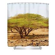 Trees In Kenya Shower Curtain