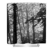 Trees In Mist Shower Curtain