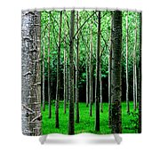 Trees In Rows Shower Curtain by Julian Perry