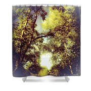 Trees In Summer Shower Curtain