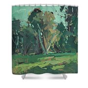 Trees In Sunlight Shower Curtain