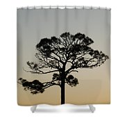 Trees In Sunset Shower Curtain