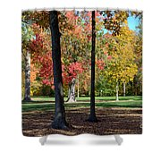 Tree's In The Forest 2 Shower Curtain