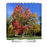 Tree's In The Forest 4 Shower Curtain