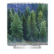 Trees In The Mist Shower Curtain