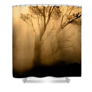 Steaming Trees Shower Curtain