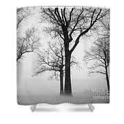 Trees In Winter  Shower Curtain