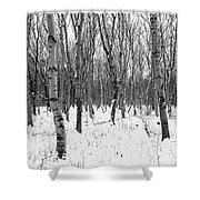 Trees In Winter Snow, Black And White Shower Curtain
