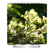 Trees Landscape Art Sunlit White Dogwood Flowers Baslee Troutman Shower Curtain