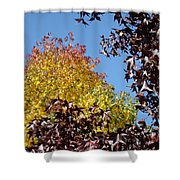 Trees Landscape Blue Sky Art Prints Fall Leaves Shower Curtain