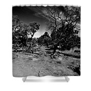 Trees Of Canyon Lands Shower Curtain