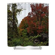 Trees Of Colorful Leaves In Autumn Mi Shower Curtain