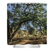Trees Of The Forest 4 Shower Curtain