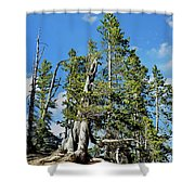 Trees On The Edge 1 Shower Curtain