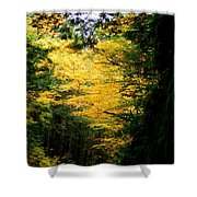 Trees Over The Flumes Gorge Shower Curtain