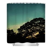 Trees - San Salvador V Shower Curtain