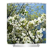 Trees Sunlit White Dogwood Art Print Botanical Baslee Troutman Shower Curtain