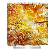 Trees Toward The Sun Shower Curtain