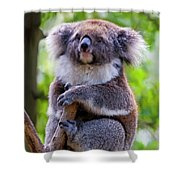 Treetop Koala Shower Curtain