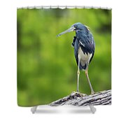 Tri-color Heron Shower Curtain