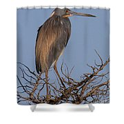 Tri Color Heron Shower Curtain