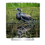 Tri-colored Heron 12 Shower Curtain