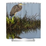 Tri-colored Heron And Reflection Shower Curtain