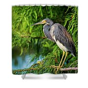 Tri-colored Heron At Sunset  Shower Curtain