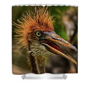 Tri Colored Heron Chick Shower Curtain