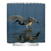 Tri Colored Heron Fishing Shower Curtain