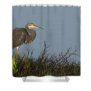 Tri-colored Heron In The Morning Light Shower Curtain