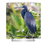 Tri-colored Heron On A Branch  Shower Curtain