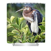 Tri-colored Heron On Guard  Shower Curtain
