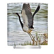 Tri Colored Heron Takeoff Shower Curtain