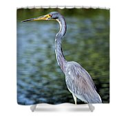 Tri, Tri, Tricolor As You Might Shower Curtain