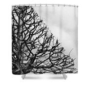 Triangle Tree Shower Curtain