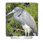 Tricolor Heron Profile Shower Curtain