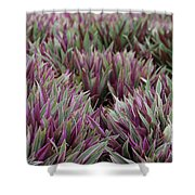 Tricolor Moses In The Cradle Plant Shower Curtain