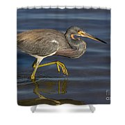 Tricolored Heron 1 Shower Curtain