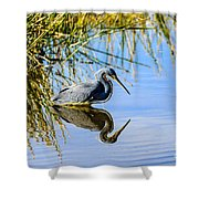 Tricolored Heron 2 Shower Curtain