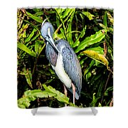 Tricolored Heron 3 Shower Curtain