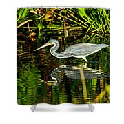 Tricolored Heron 5 Shower Curtain