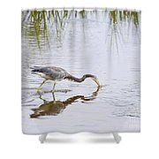 Tricolored Heron Grabs A Bite Shower Curtain