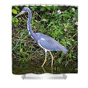 Tricolored Heron Hunting Shower Curtain