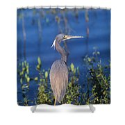 Tricolored Heron In Monet Like Setting Shower Curtain